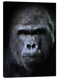 Lienzo  male gorilla in Portrait