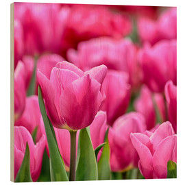 Madera  Tulips in pink - Filtergrafia