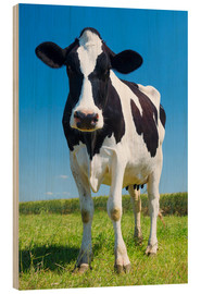 Madera  Cow - Black and White