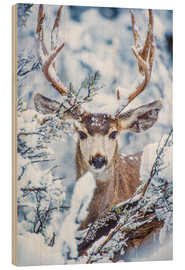 Madera  Snowy Stag