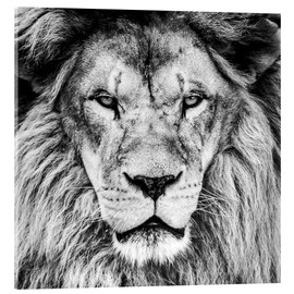 Metacrilato  King Lion - black and white