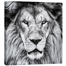 Lienzo  King Lion - black and white
