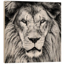 Madera  King Lion - black and white
