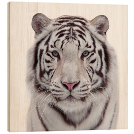 Madera  The white tiger