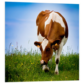 Forex  Cow on pasture