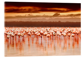 Cuadro de metacrilato  Flamingos at sunset