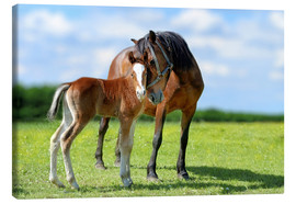 Lienzo  Mother Love - mare with foal