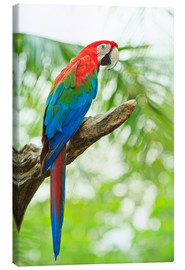 Lienzo  Tropical parrot