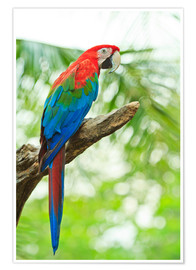 Póster  Loro tropical