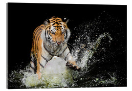 Cuadro de metacrilato  Tiger Makes the water