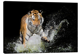 Lienzo  Tiger Makes the water