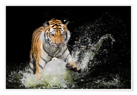 Póster  Tiger Makes the water