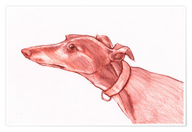 Póster Greyhound pencil drawing white and red colour pencil sketch
