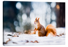 Lienzo  Squirrel looking for its nut