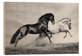 Madera  Horses black and white