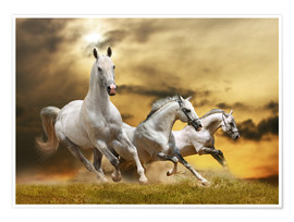 Póster white horse galloping