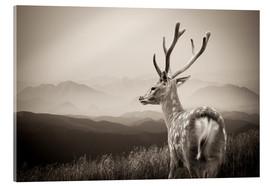 Metacrilato  Stag in the mountains