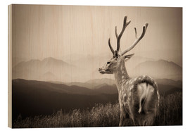 Madera  Stag in the mountains
