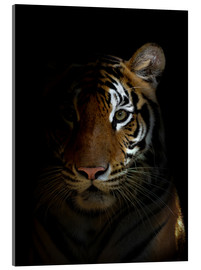 Cuadro de metacrilato  bengal tiger head in the dark night