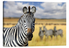 Lienzo  View of zebras