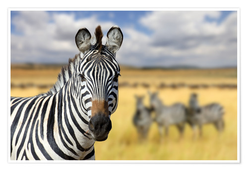 Póster View of zebras