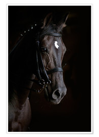Póster  Dressage horse in profile