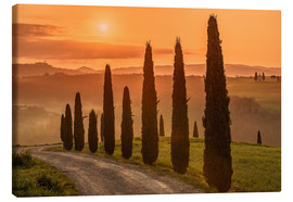 Lienzo  Golden Morning - Tuscany - Achim Thomae
