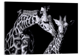 Cuadro de metacrilato  Mother and child giraffe - Sabine Wagner