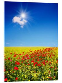 Metacrilato  Sunny landscape with flowers in a field