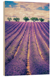 Cuadro de madera  Lavender field with trees in Provence, France