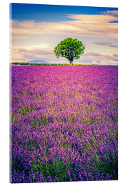 Metacrilato  Lavender field with tree in Provence, France