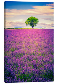 Lienzo  Lavender field with tree in Provence, France