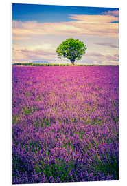 Forex  Lavender field with tree in Provence, France
