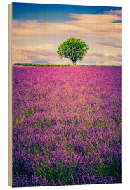 Cuadro de madera  Lavender field with tree in Provence, France
