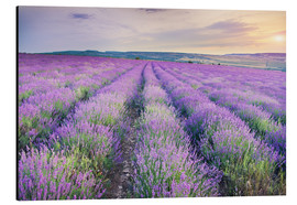 Aluminio-Dibond  Meadow of lavender on sunset