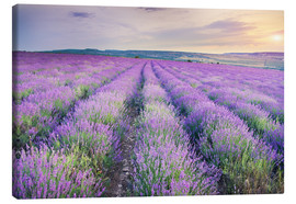Lienzo  Meadow of lavender on sunset