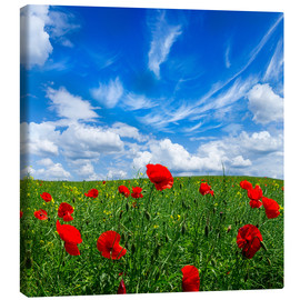 Lienzo  Red poppies on green field