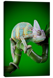 Lienzo  green chameleon on bamboo