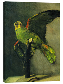 Lienzo  The green parrot - Vincent van Gogh