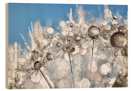 Madera  Dandelion White and Blue - Julia Delgado