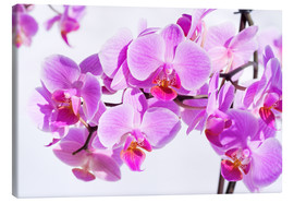 Lienzo  Beautiful pink-magenta orchid