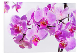 Forex  Beautiful pink-magenta orchid