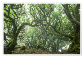 Póster Ancient Fairy-Tale Forest on Madeira