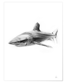 Póster  Shark I - Alexis Marcou