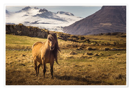 Póster Iceland horse