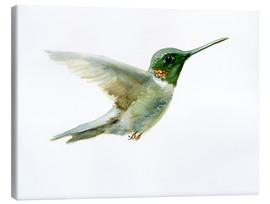 Lienzo  Hummingbird - Verbrugge Watercolor