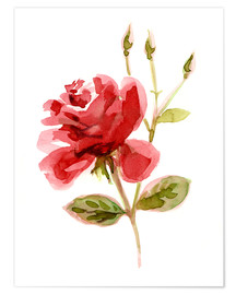Póster Red Rose