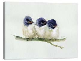 Lienzo  3 little swallows - Verbrugge Watercolor