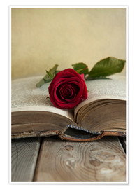 Póster Red rose and old open book