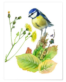 Póster  Blue Tit Bird and Sowthistle - Verbrugge Watercolor